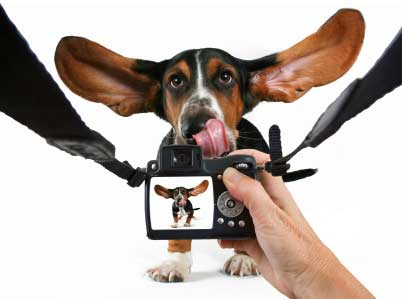 Dog photos in Stock photography: plenty of dog photos